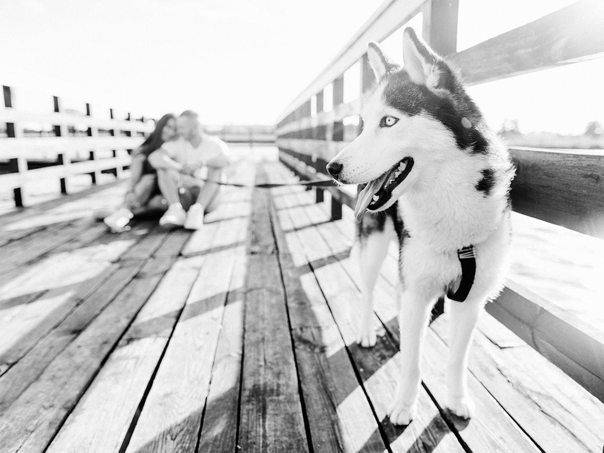 tiere-tierkranken-hunde-hundehalter-pferde-pferdehaftplficht